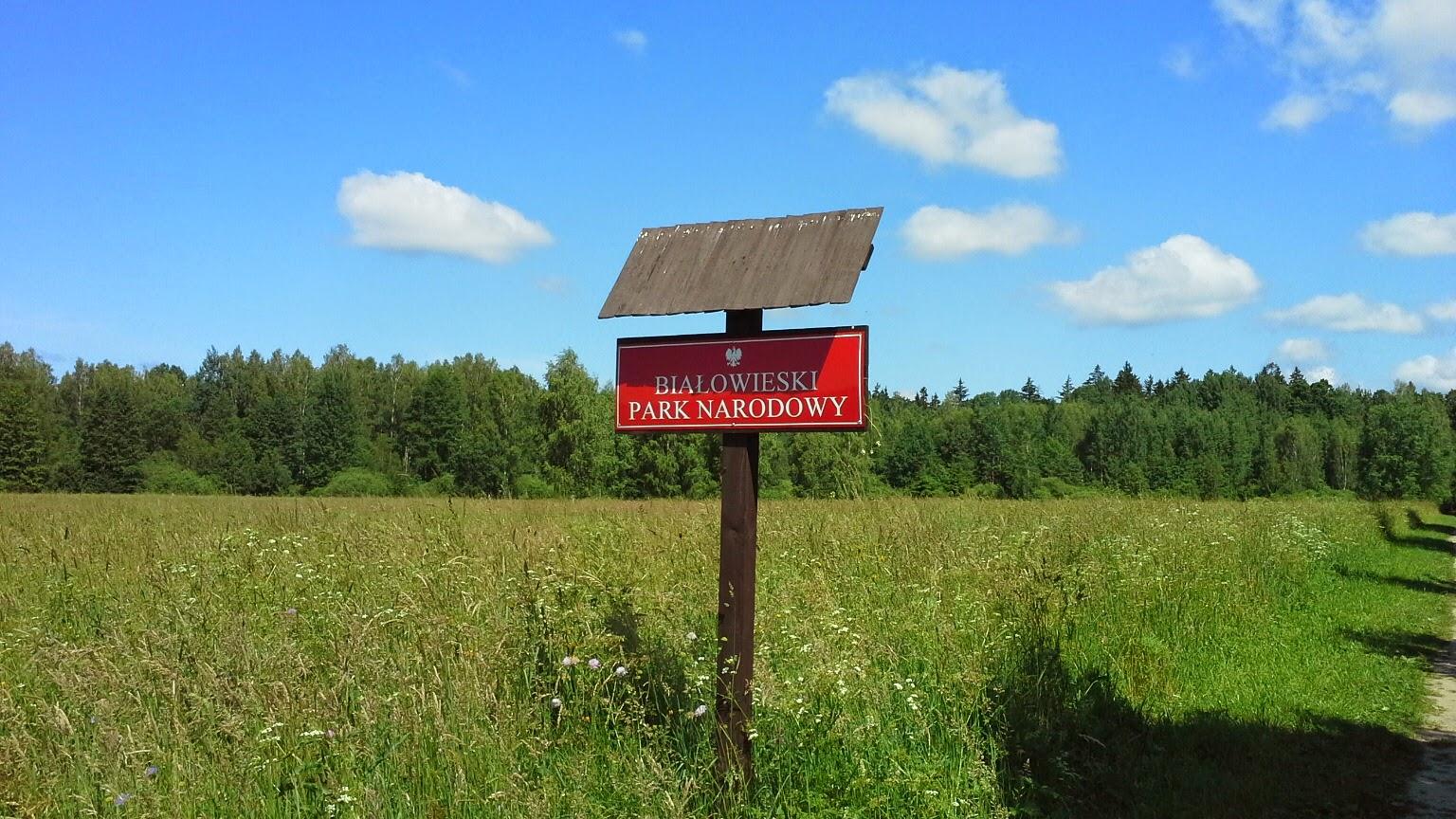 Visitare la Foresta di Bialowieza in Polonia
