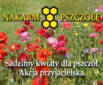 Sadzimy kwiaty dla pszczół