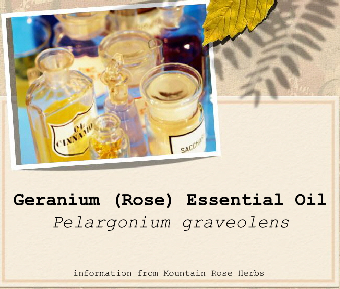 Fresh picked beauty geranium rose essential oil - Rose essential oil business ...