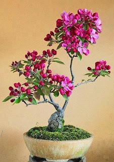 la belleza hecha bonsai