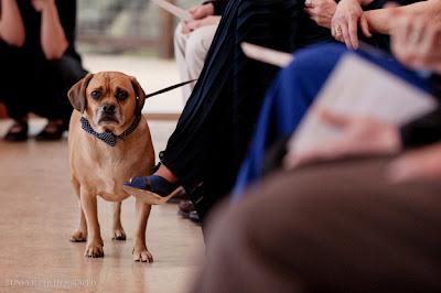 perrito con lazo azul en el cuello