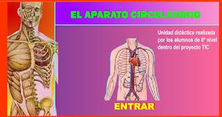 http://www.ceiploreto.es/sugerencias/averroes/manuelperez/udidacticas/udanatomia/circulatorio/index.htm