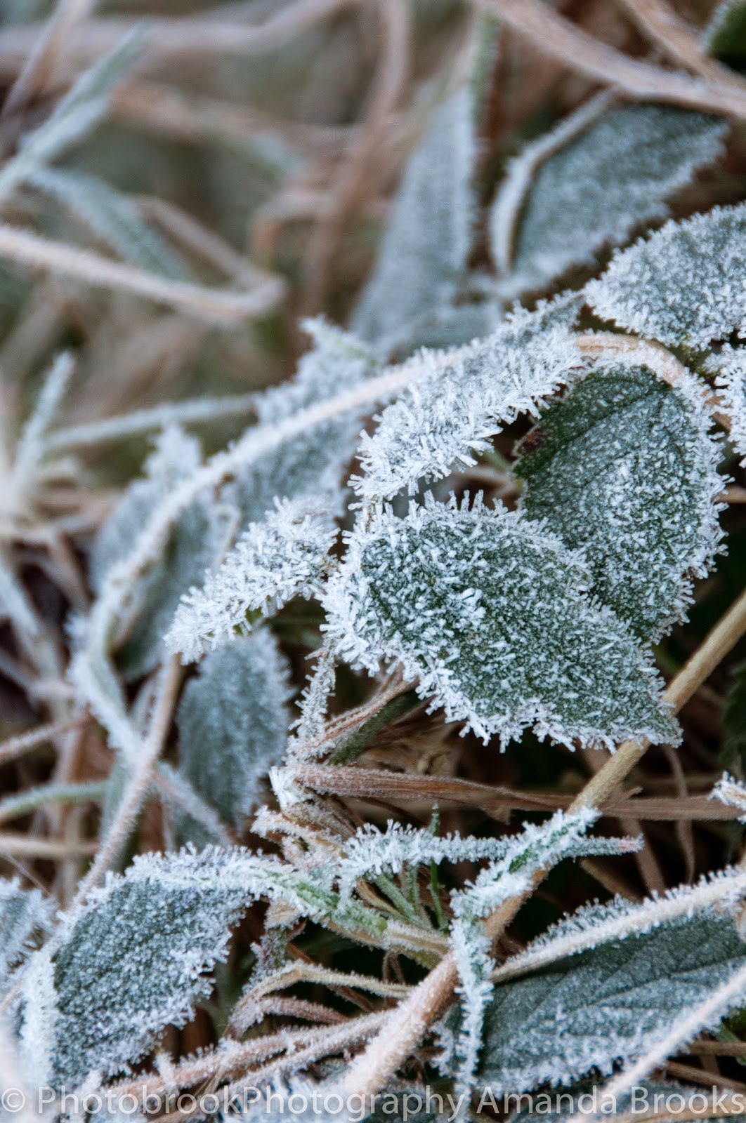 Plants under a heavy frost