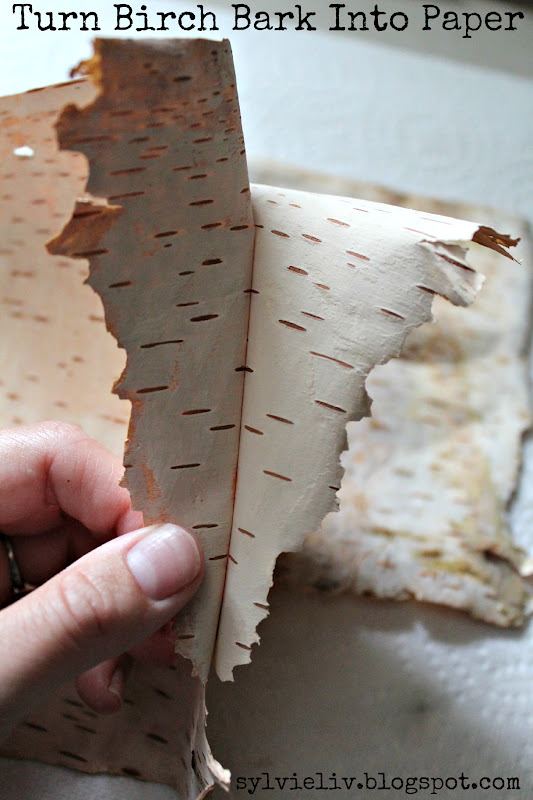 birch bark paper My girls love to identify birch trees i must admit they are easy to spot, with their papery white bark there is something very graceful about a birch tree.