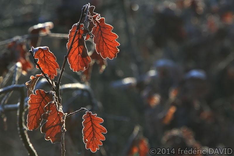 matin froid givre végétation macro forêt Rougeau Sénart
