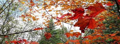 Couverture facebook feuilles d'automne 2