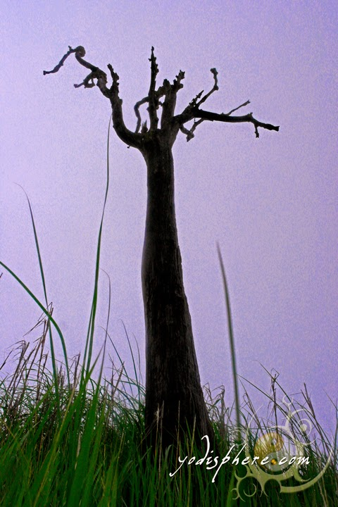 Dead tree against the green grass and hazy sky hover_share
