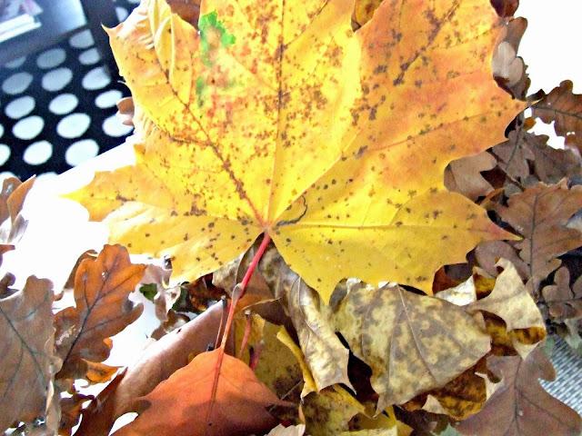 kolorowe liście pomysły na jesien dekoracje