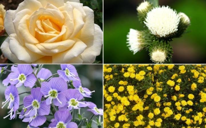 BEST OF CHELSEA FLOWERS