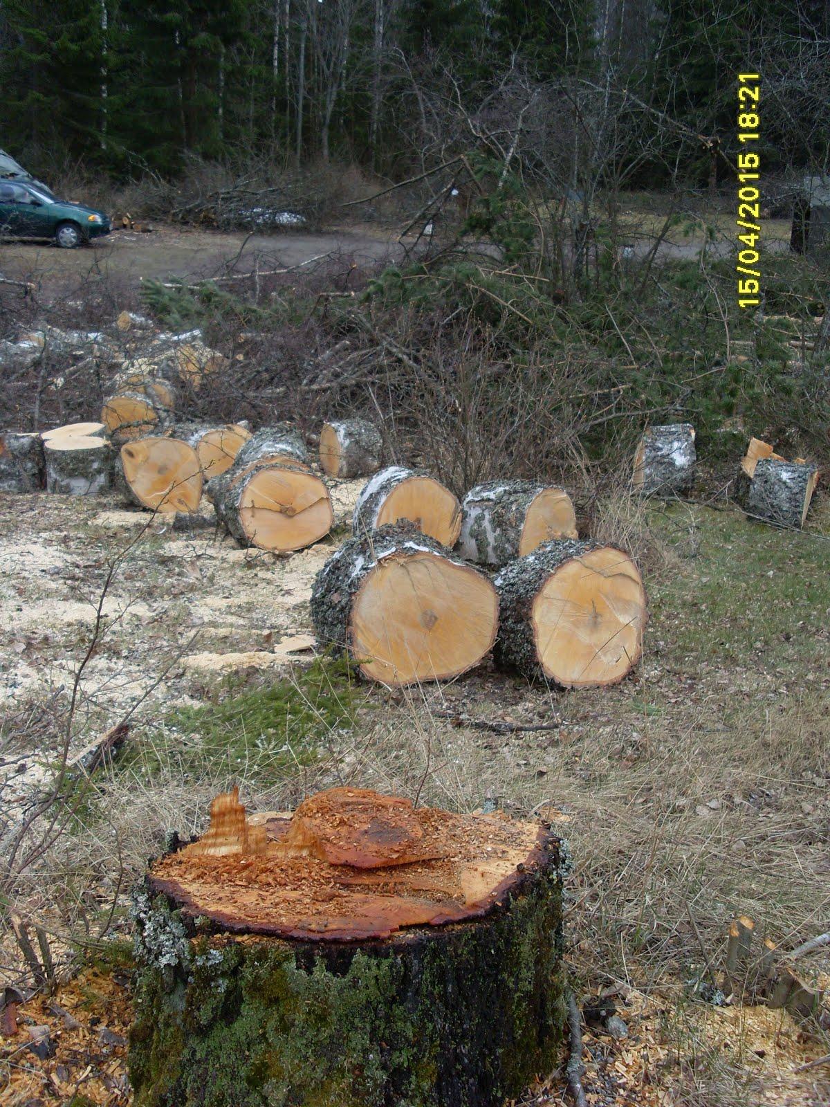 Pihapuiden kaadot, pihapuiden karsinnat ja palastelut tuntityönä. Isot puut erikseen hinnoitellen
