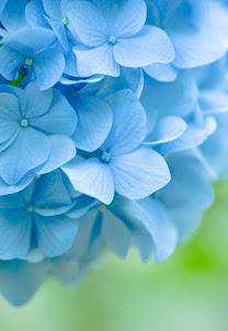 Dichosa la flor que no se sabe bella y tampoco fea  mucho menos perfumada.  Sólo sabe Ser.