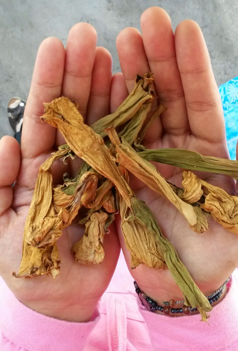 Rumah Herba & Akar kayu, resdung, tradisional medicine, temperungak, kecubung
