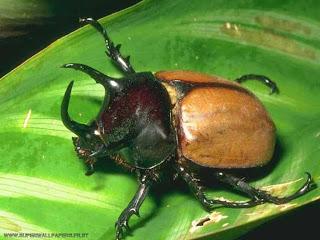 imagenes de insectos