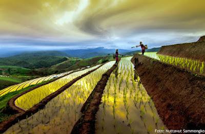 Arti Petani: Sebuah Maha Karya