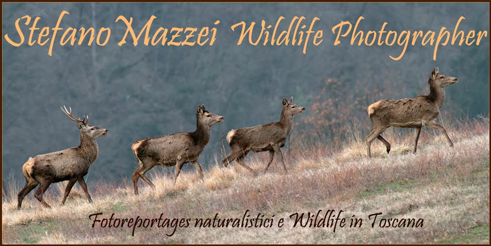 Stefano Mazzei wildlife photographer