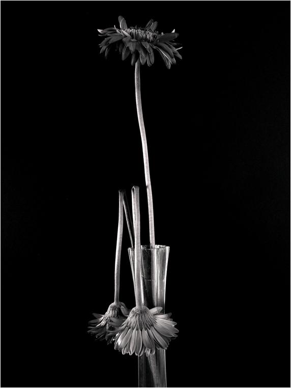 emphoka, photo of the day, Mike Childs, Ricoh GX200