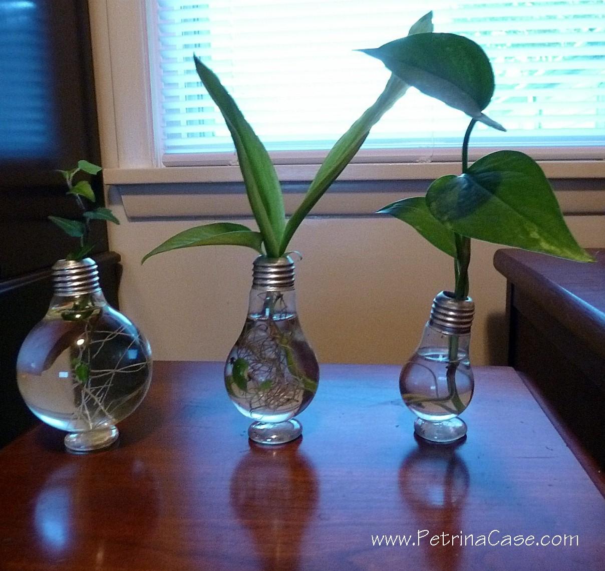 Petrina Case Studio Recycle A Used Light Bulb