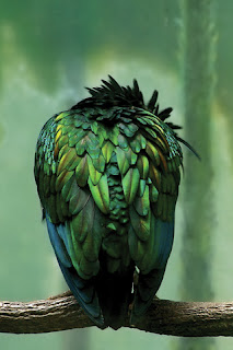 Greeny Bird iPhone Wallpaper
