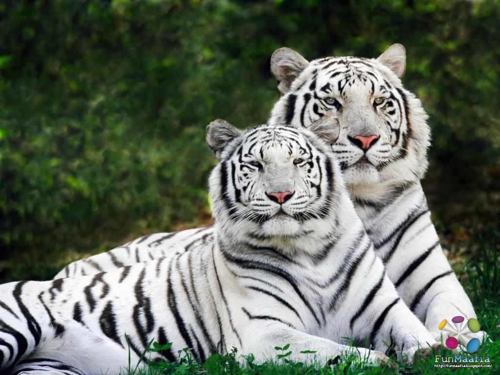 http://4.bp.blogspot.com/-IAF1pAKCnBA/T9gafdXsQzI/AAAAAAAAABs/xlr2aIy__kQ/s1600/animals+wallpapers+for+desktop.jpg