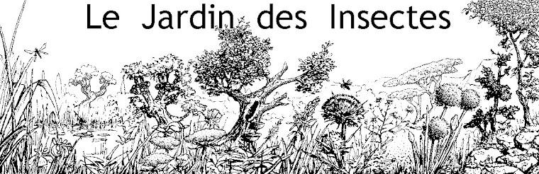 Le Jardin des Insectes, le blog d'Arnaud Ville