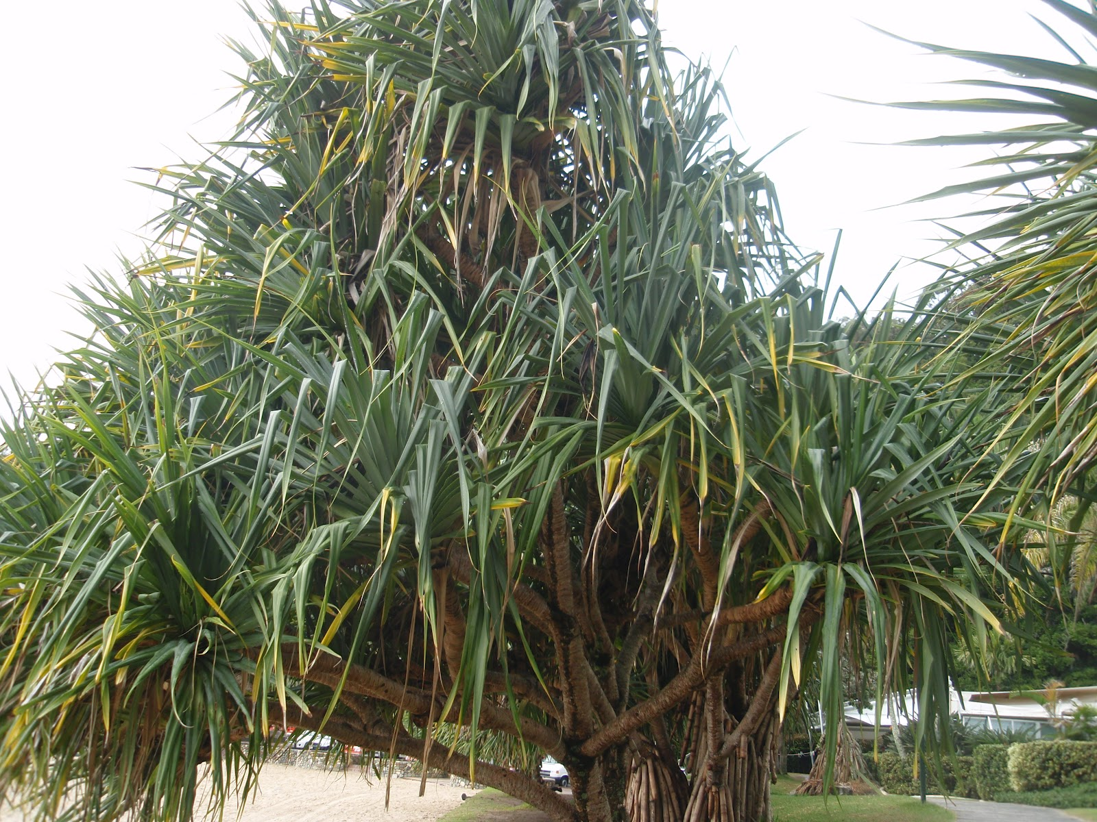 garden gatherings pineapples don 39 t grow on trees. Black Bedroom Furniture Sets. Home Design Ideas