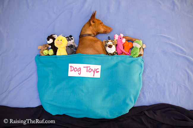 box of dog toys