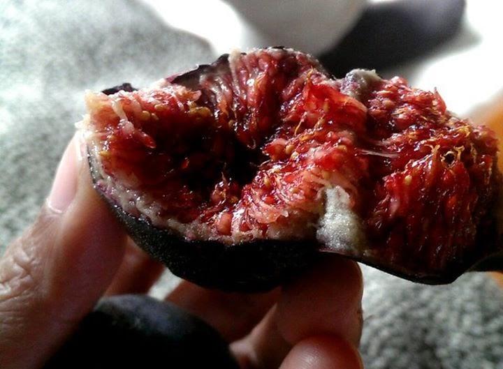 Morucha figs