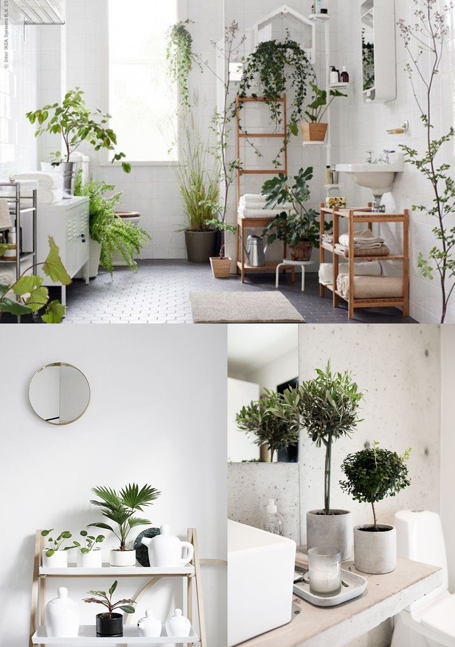 bathroom plant ideas