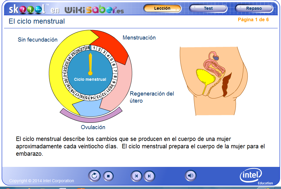 http://www.wikisaber.es/Contenidos/LObjects/menstrual_cycle/index.html