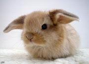 Super horseman . Cute bunny.