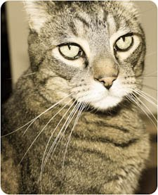 In Memoriam...our sweet Pekoe Bean ...1999-2011...