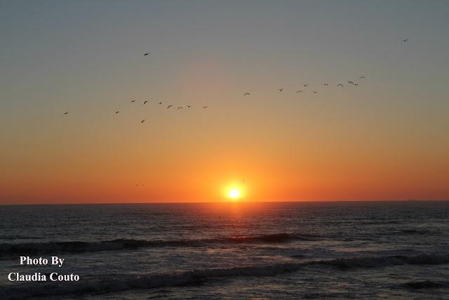 Fotografia de um lindo pôr-do-sol  com a passagem de um bando de Gaivotas. A combinação perfeita da nostalgia de um pôr-do-sol com a vivacidade das aves em movimento.