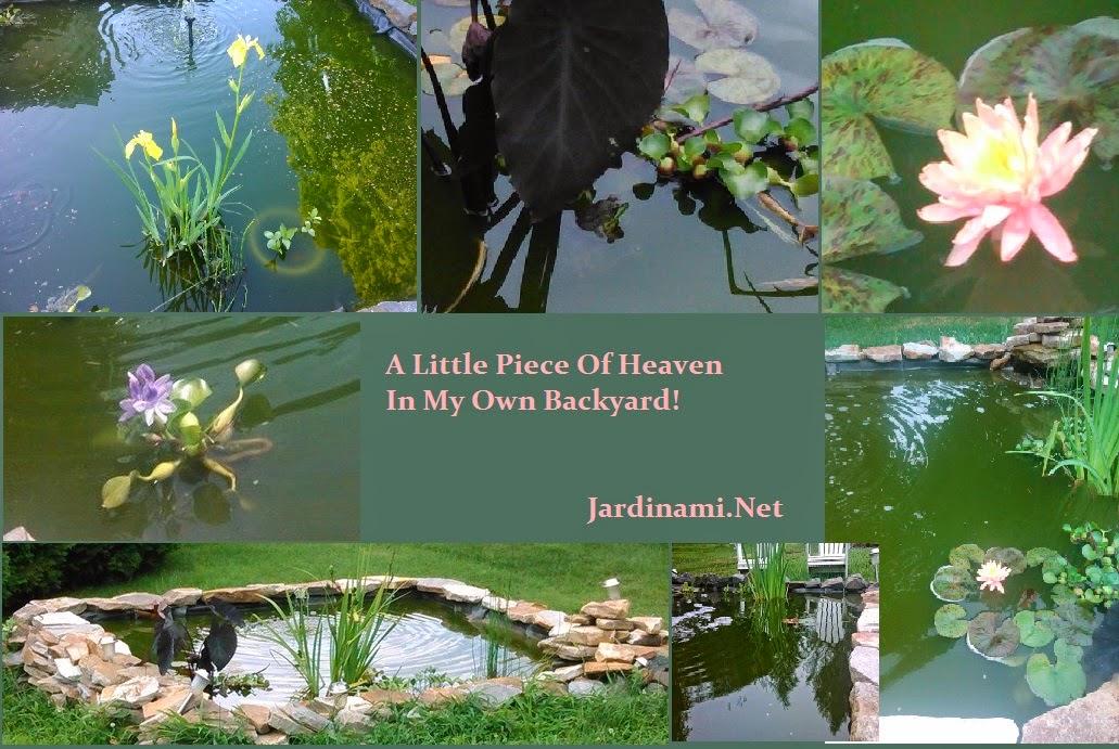 Jardinami Water Garden 2013-14