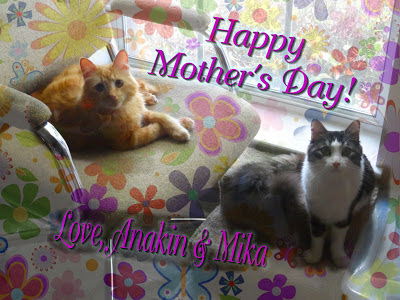 Anakin The Two Legged Cat & Mika, Happy Mother's Day 2013