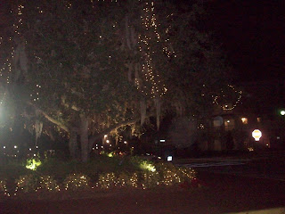 Trees alight with twinkle and Spanish Moss!