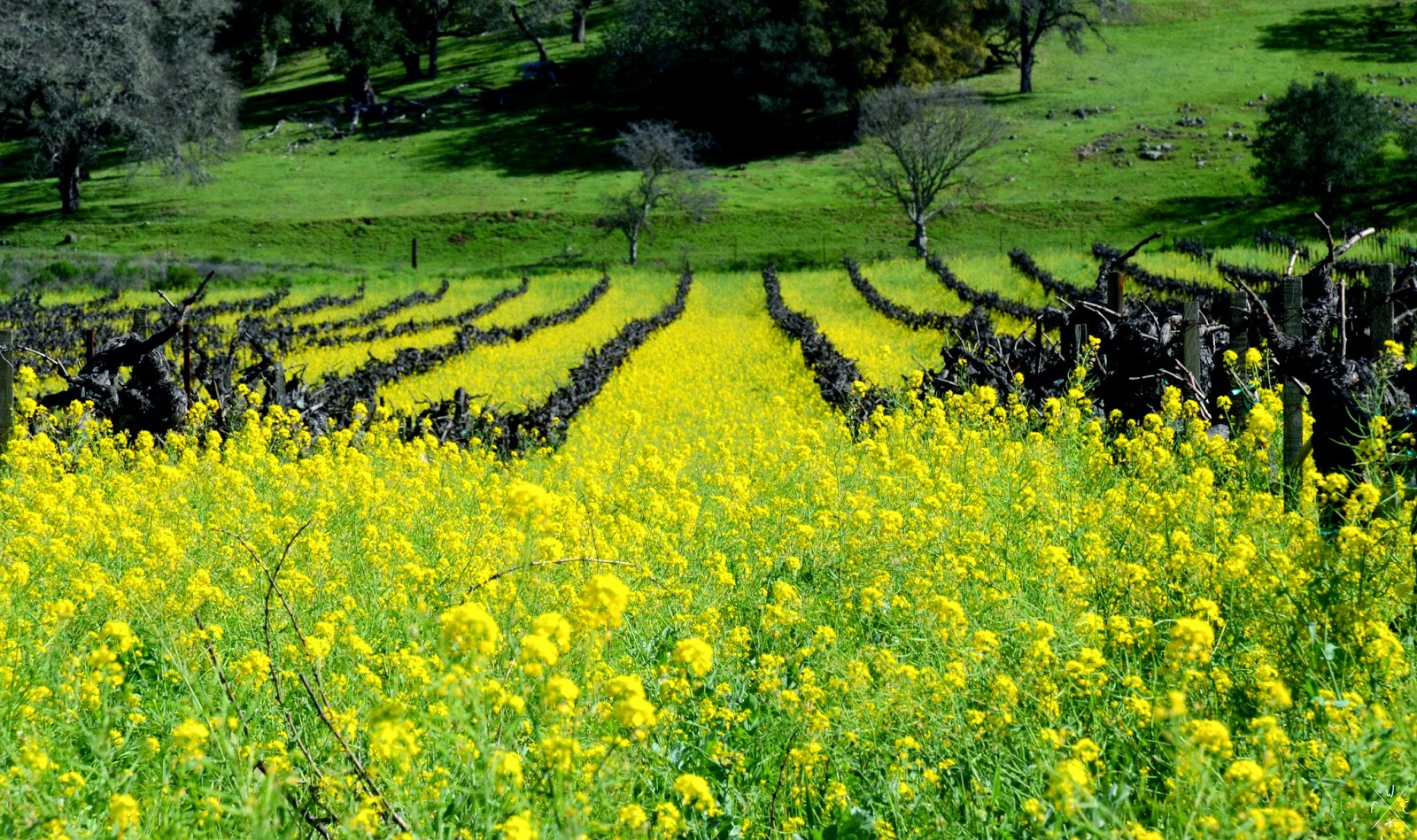 Napa Valley, Californie, USA