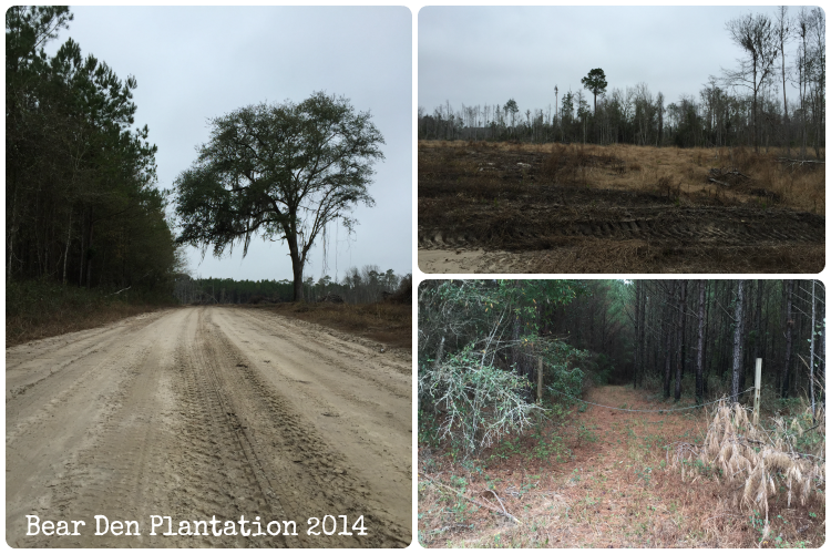Florida Panhandle Dirt County Roads from the Bear Den Plantation