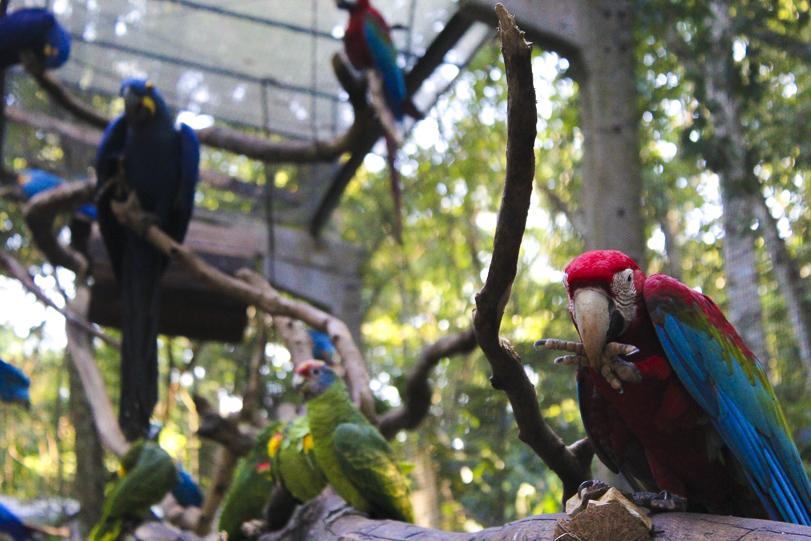 02022015-parque-das-avesParque das Aves. Foto: Mylene Vijette