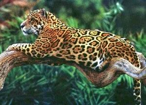 Arti Mimpi Jaguar