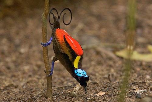 spesis burung unik