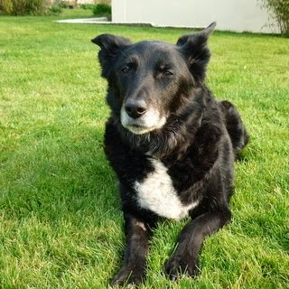 Tess, faithful boat dog 1995-2013