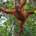 3D2N Orangutan Tour in Tanjung Puting National Park