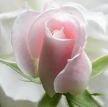 Clique e visualize o desabrochar de uma rosa!