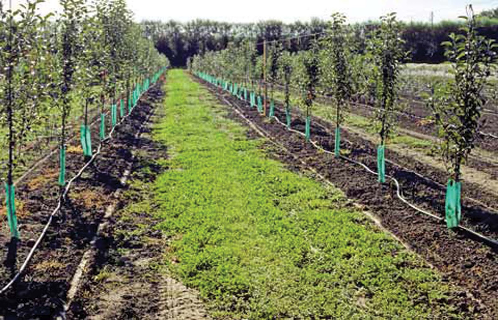 Perigreen Drip Irrigation Offers Huge Savings For Farmers