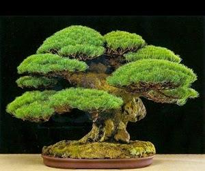 """<img src=""""bonsai22.jpg"""" alt=""""foto bonsai"""">"""