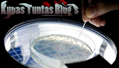 Gen purba 500 juta tahun hidup kembali (dailymail.co.uk) | Kupas Tuntas