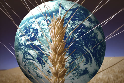 Why did humans overwhelmingly chose the agricultural option?