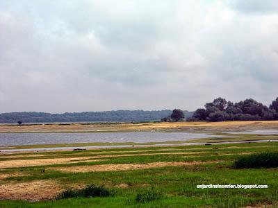 Design Lacs du Parc National de la forêt d'Orient