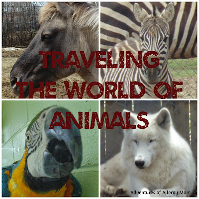 10 tips to best enjoy the zoo with your toddler. Traveling the World of Animals at the Zoo