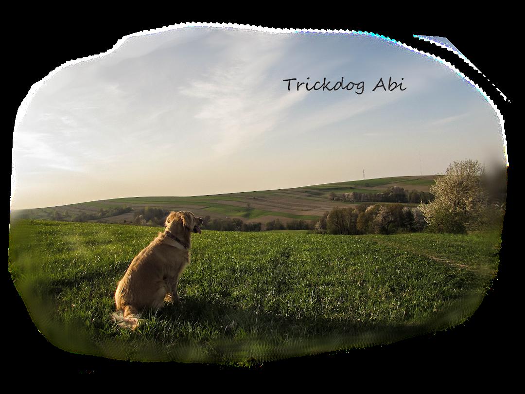 Trickdog Abi